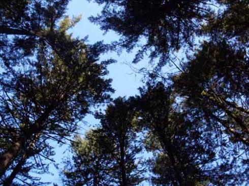 tryon-treetops