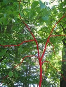 ted tree